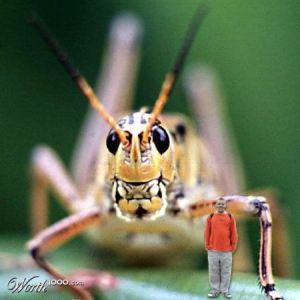 kneehightograsshopper